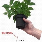 Вертикальное озеленение в Казани
